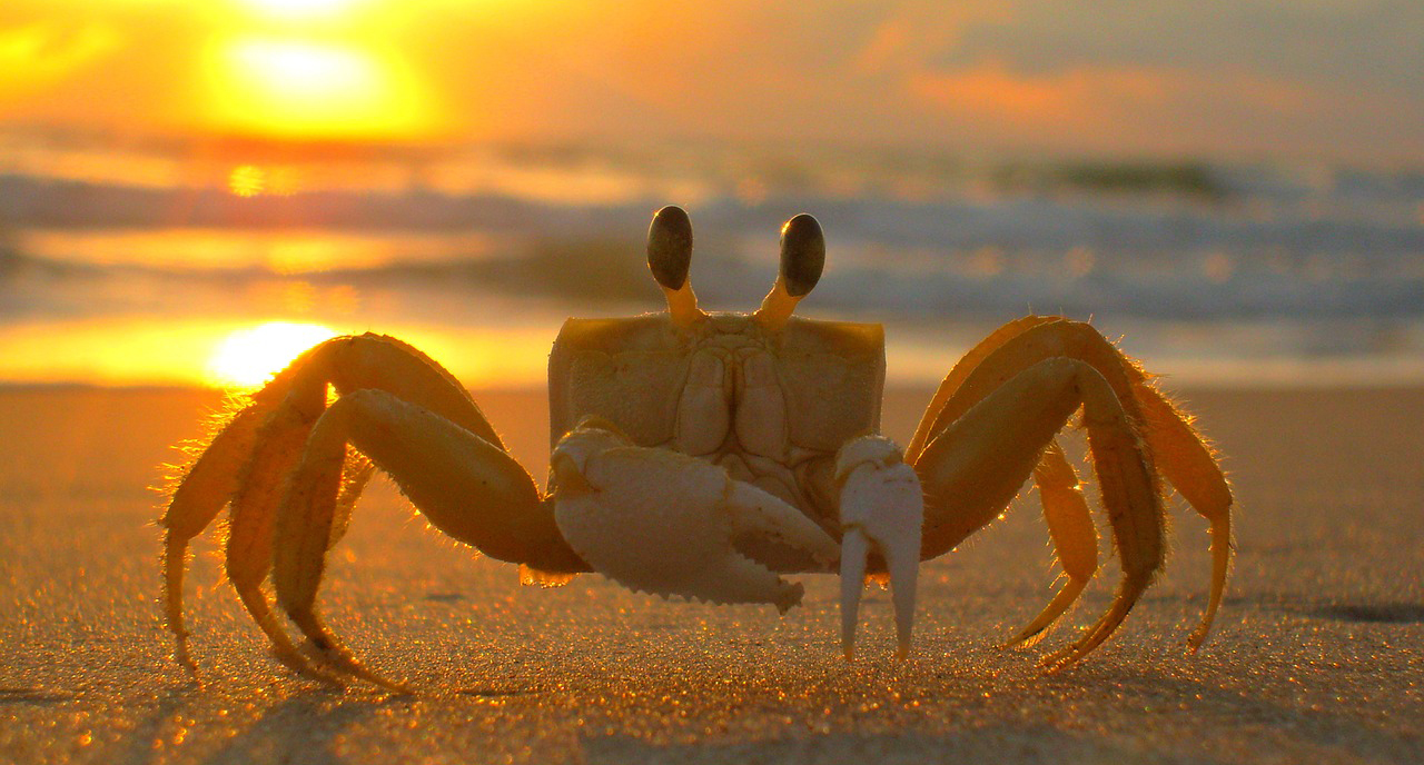 crabs in a bucket theory, art, artist, snarky, support, artists supporting artists
